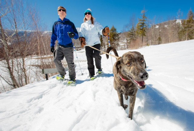 Don't Forget Fido: Dog-Friendly Ski Lodges