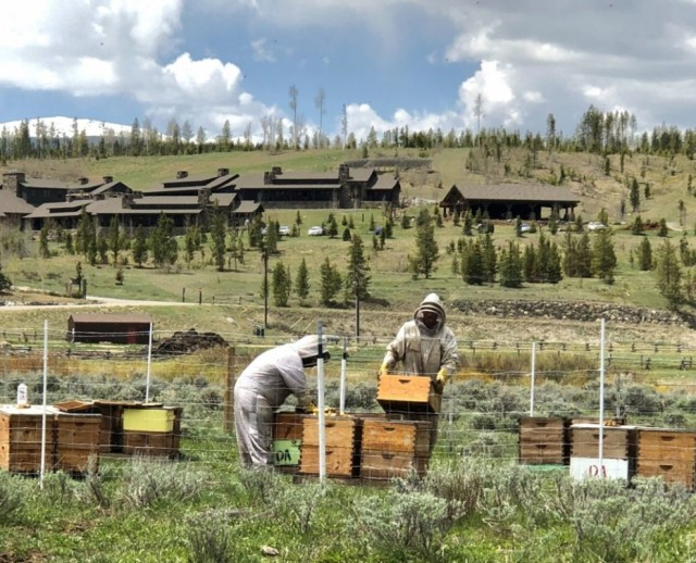 Devils-Thumb-Ranch-bees