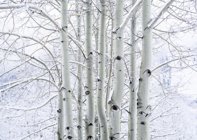 Aspen-White-Cover-Photo